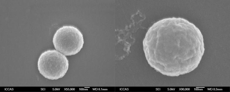 图2 聚丙烯球形颗粒的扫描电镜照片