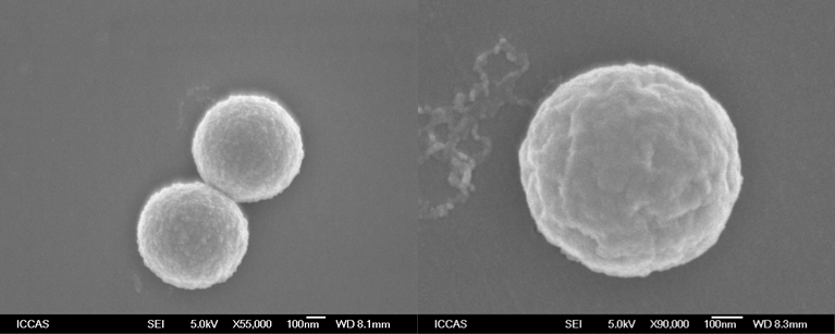 Fig 2 Scanning electron microscopy images of the PP with excellent shape.